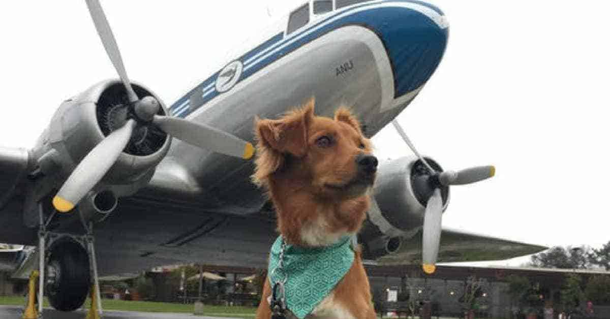How-Much-Does-It-Cost-to-Fly-with-a-Dog