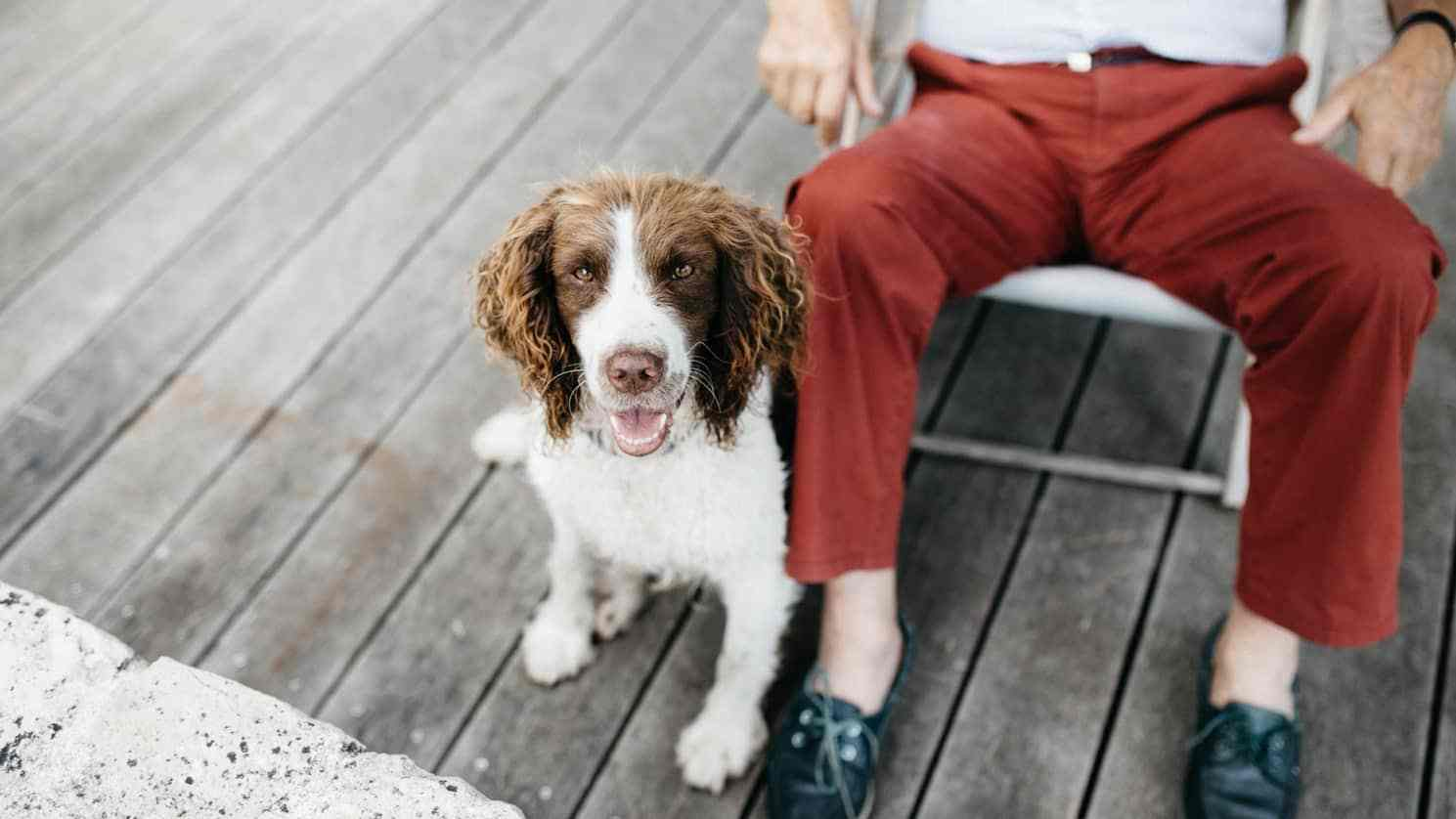 Best-Clippers-for-Cocker-Spaniels