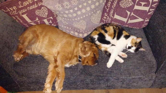 Cavalier King Charles-Spaniels and Cats