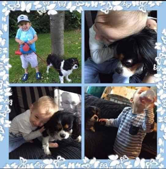 Cavalier Spaniels good with Kids